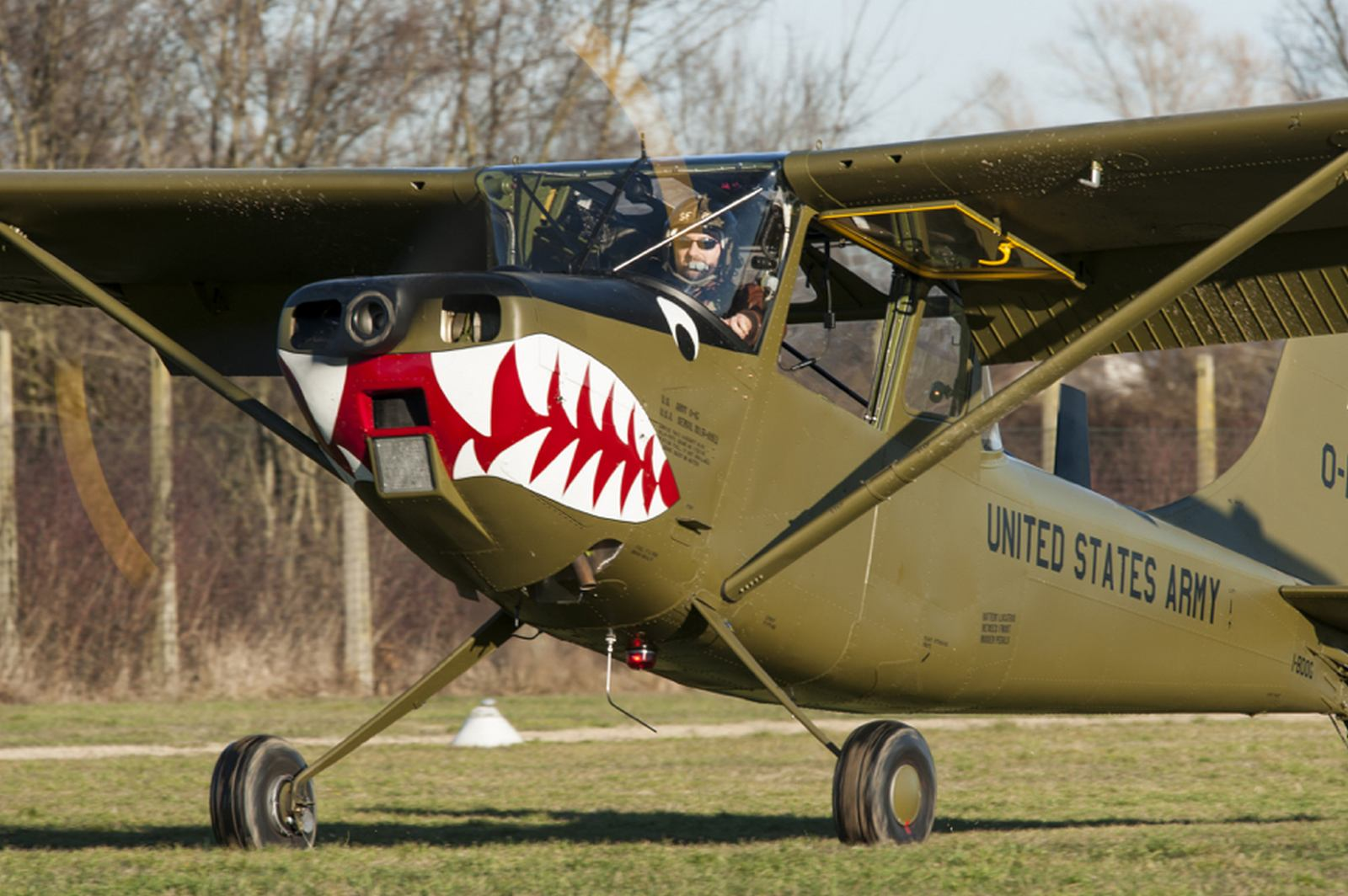Italian Bird Dog Back in the Air